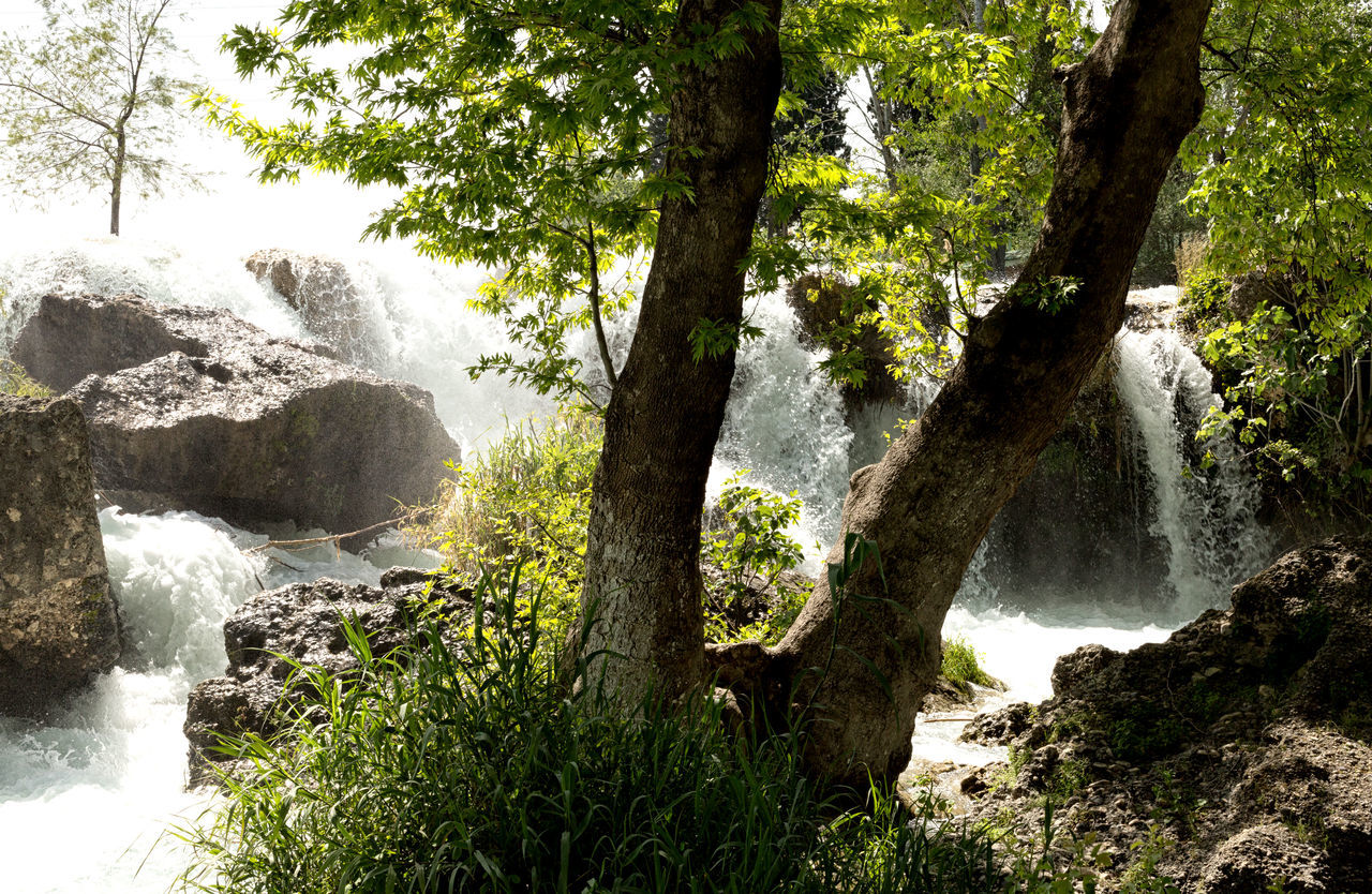 Tarsus Waterfall Beauty In Nature Falls Greenery Gushing Water Motion Nature Outdoors River Rock - Object Rushing Water Scenics Tarsus Tarsus Waterfall Tarsus Şelalesi Tarsus, Turkey, Waterfall, South, Tourist Attraction  Tranquil Scene Tranquility Tree Tree Trunk Turkey Water Waterfall Waterfalls White Water
