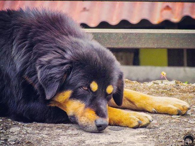 AtPeace Dog Dogsofinstagram Pet