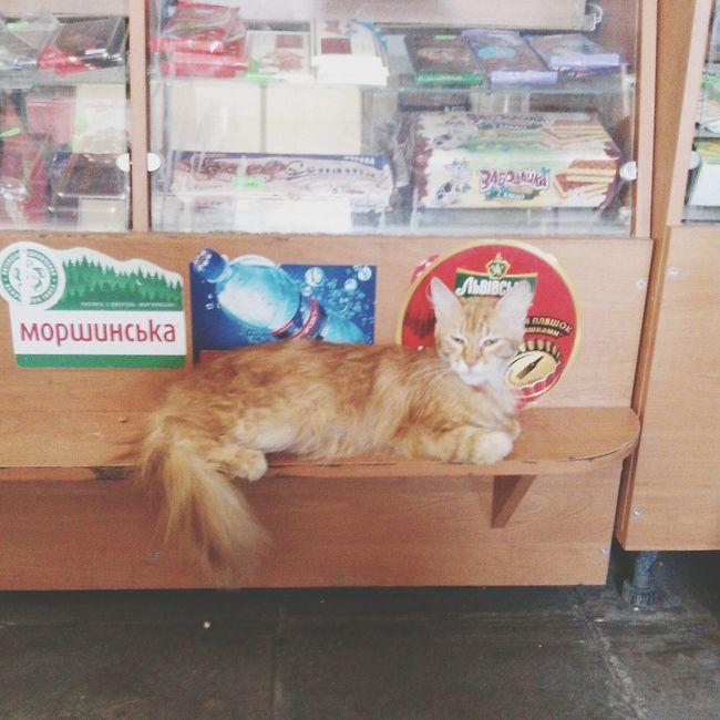 Cat Watching Cat♡ Cat. Cat