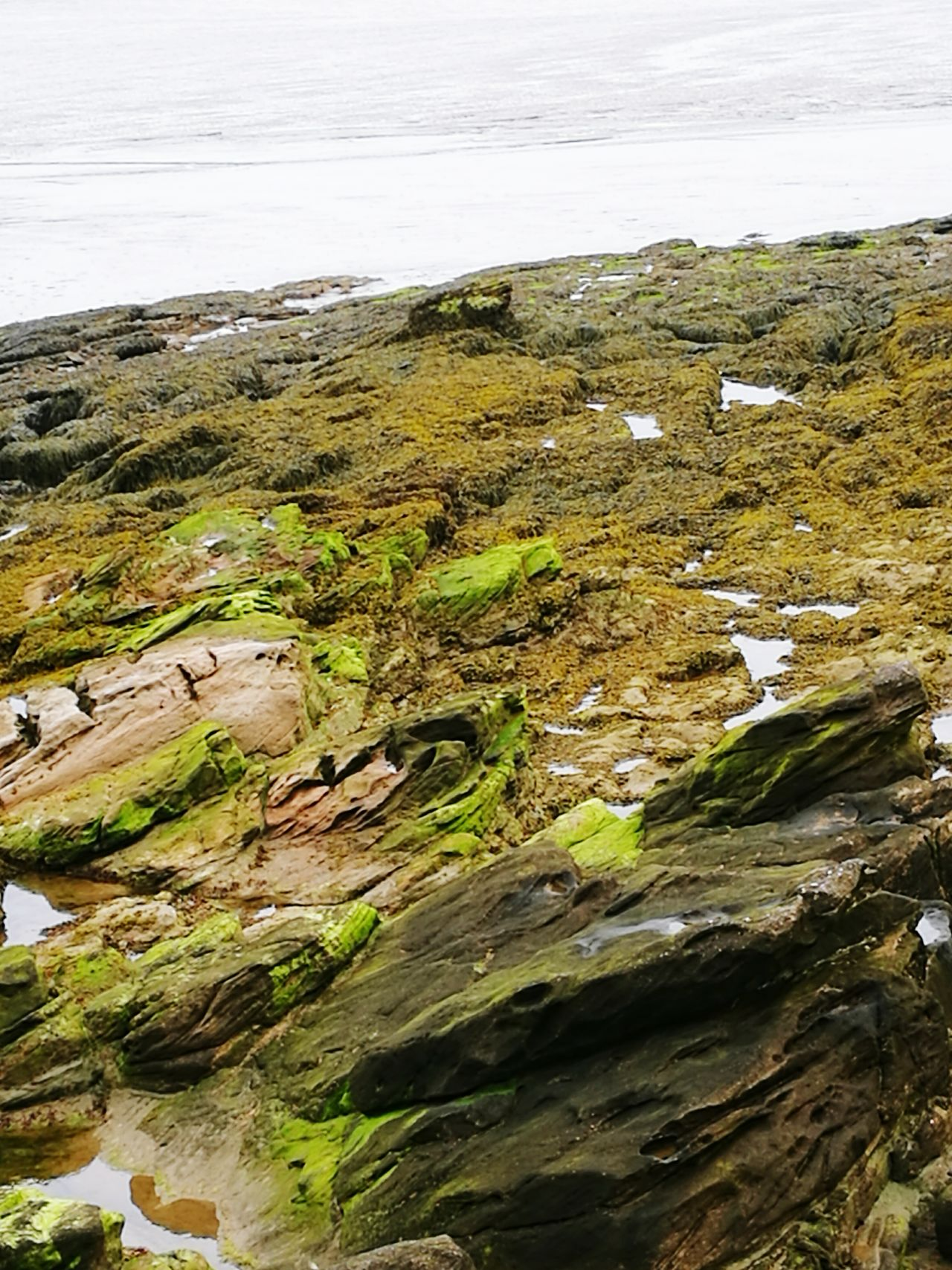 Beach Sea Nature Outdoors Water Tranquility Rock - Object Landscape No People Tranquil Scene Tide Beauty In Nature Day Scenics Low Tide Horizon Over Water Sky Moss