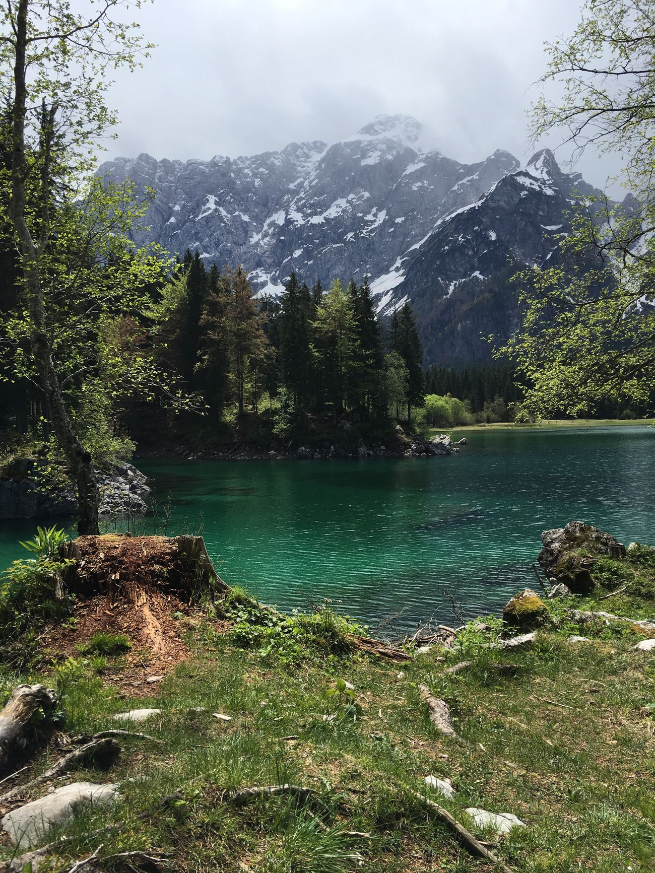 Check This Out The Week Of Eyeem Nofilter Nofilter#noedit EyeEm Beautiful Day Naturelovers Trees Mountains The Great Outdoors - 2016 EyeEm Awards Julian Alps EyeEm Nature Lover EyeEm Best Shots - Nature EyeEmBestPics Eyem Nature Lovers  Nature Nature_collection Italy