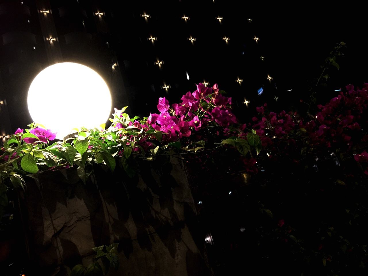 flower, night, growth, illuminated, no people, nature, low angle view, plant, freshness, fragility, beauty in nature, outdoors, close-up