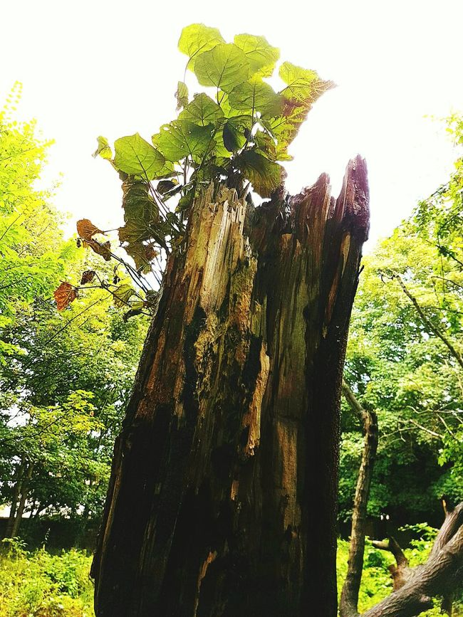 Tree Stump Woods Death And Life Wildlife & Nature First Eyeem Photo