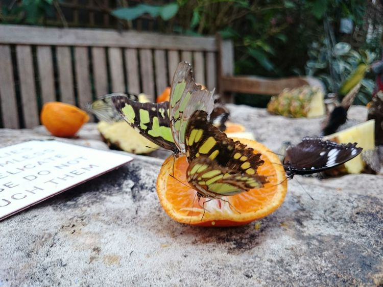Buterfly Tropic