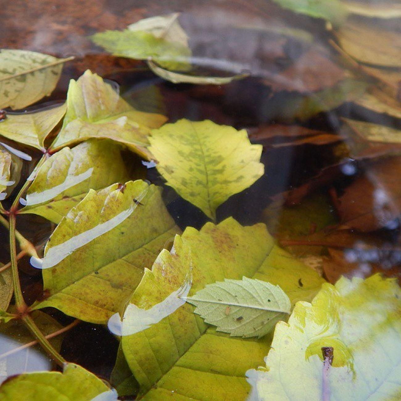 Осень это то время, когда в каждой луже видишь красоту) Николаев осень Природа прогулка Nikolaevgram Nikolaev Nature