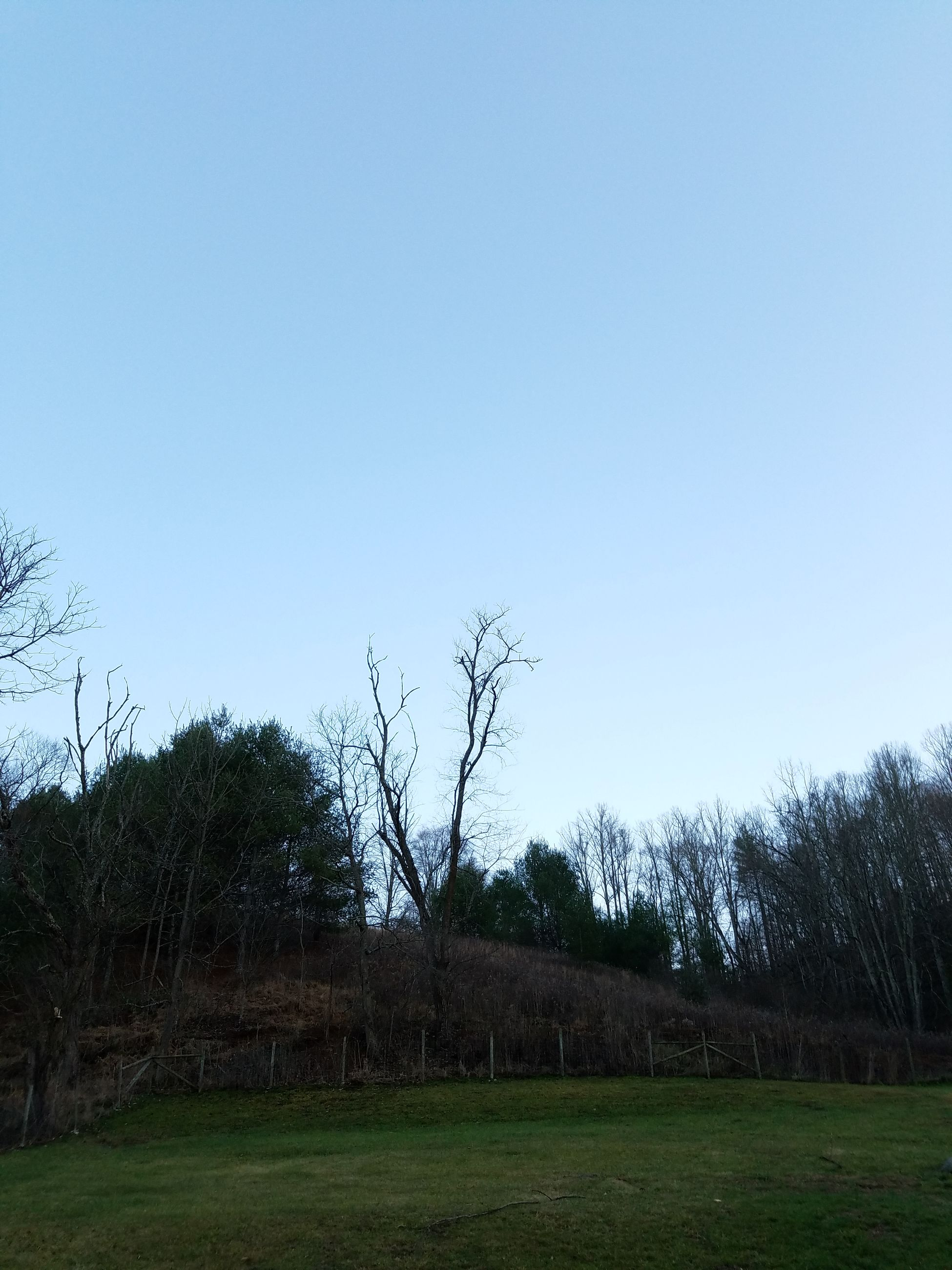 tree, clear sky, no people, sky, tranquility, nature, field, growth, outdoors, grass, day, beauty in nature