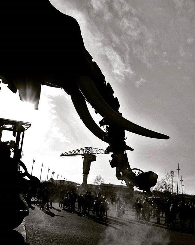 Nantes Machinesdelile Gruejaune Elephant Noiretblanc Blackandwhite Nantesbw Igersnantes