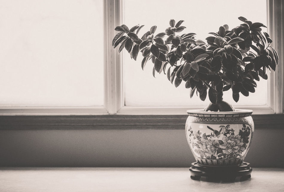 Asian  Asian Culture Black And White Black And White Photography Chinese Art Close-up Day Display Flower Pot Freshness Ginseng Home Decor Home Interior Home Is Where The Art Is Houseplant Indoors  Natural Light No People Ontario, Canada Oriental Design Oriental Style Simplicity Simplicity.  Table The Week On EyeEm Welcome To Black