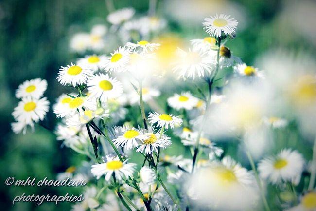 Fleurs d automne Mhlchaudeurphotographies Fujixm1 Bokeh Bokeh Love Flowers