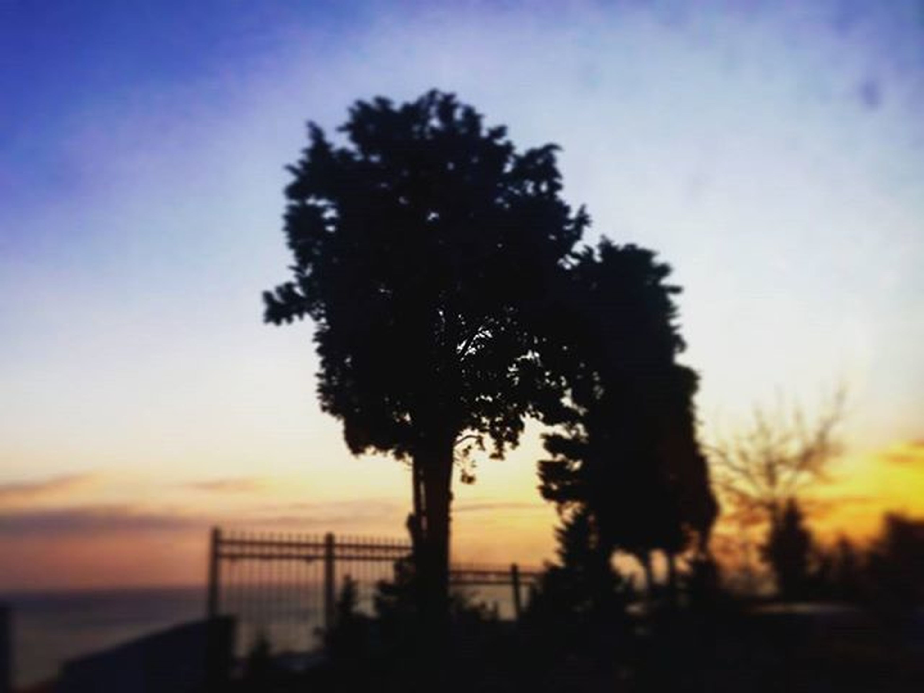 sunset, silhouette, tree, sky, tranquility, beauty in nature, nature, tranquil scene, scenics, growth, palm tree, low angle view, cloud - sky, tree trunk, dusk, outdoors, no people, idyllic, cloud, orange color