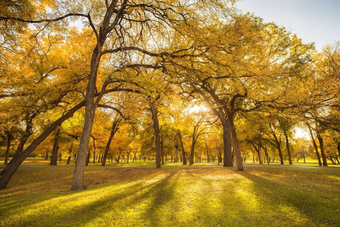 Fort Worth Fall Yellow 21mm Carl Zeiss