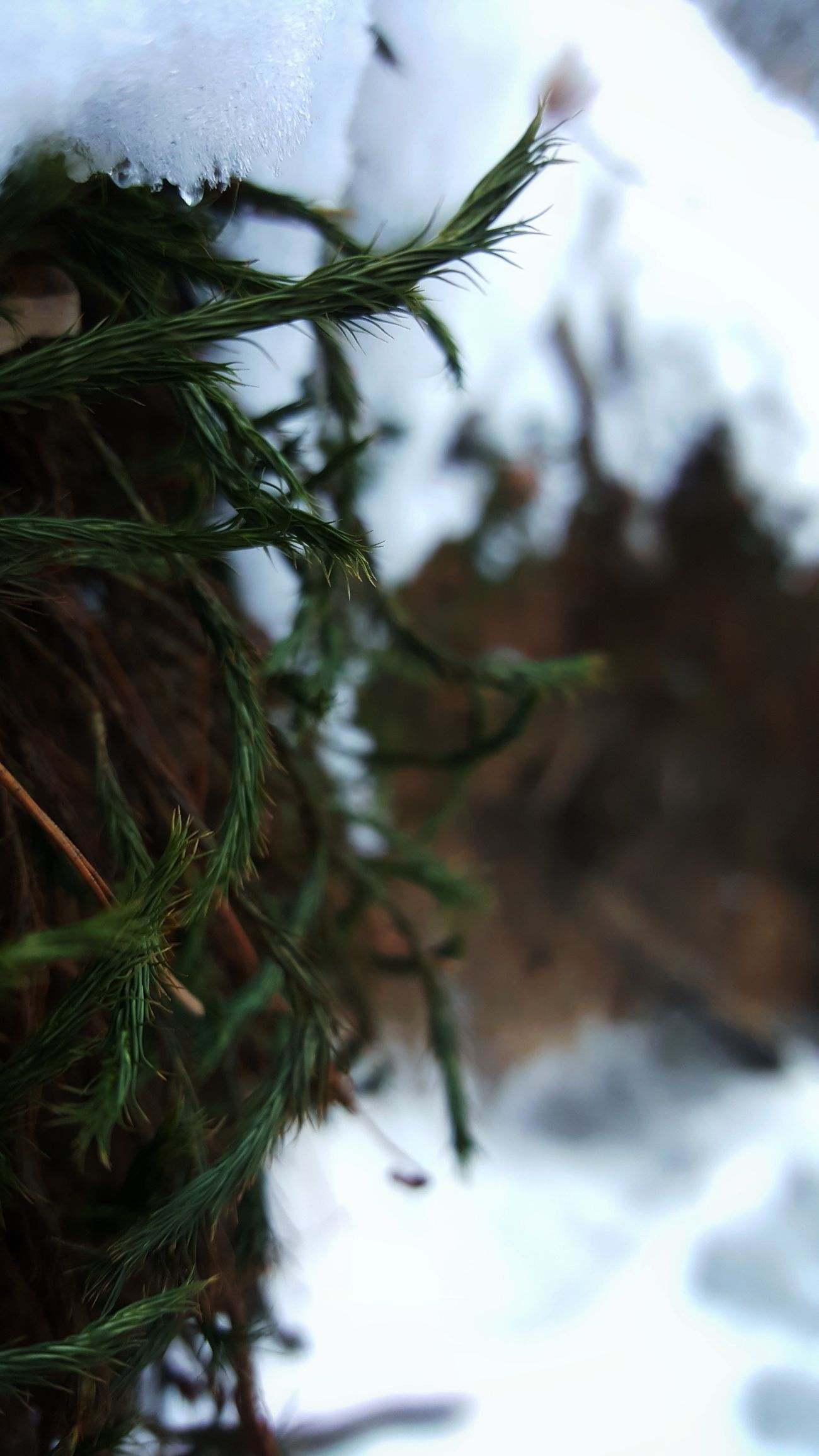 Beauty In Nature Close-up Cold Temperature Day Freshness Growth Nature Outdoors Plant Poland Snow Winter Winter