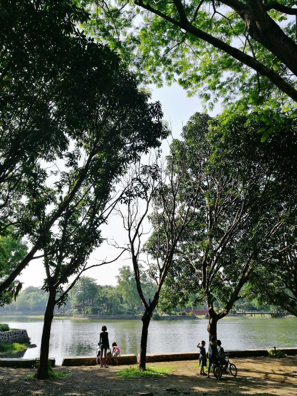tree, water, nature, branch, growth, day, outdoors, sea, beauty in nature, sitting, sky, no people