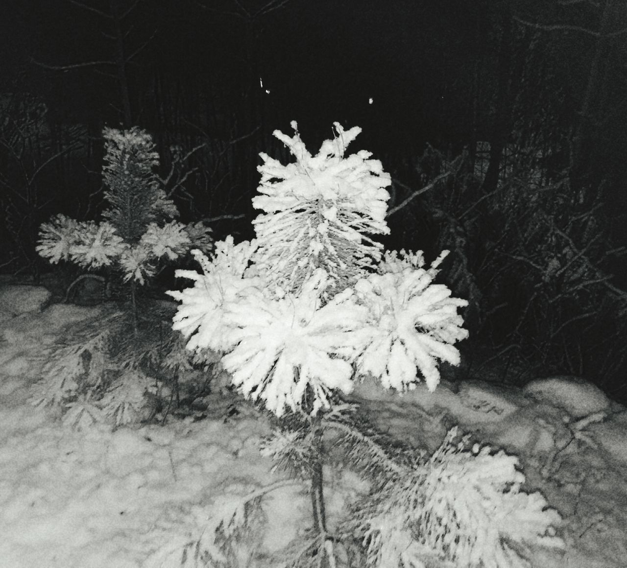 Winter Snow Cold Temperature Snowflake Nature No People Beauty In Nature Outdoors Close-up Fragility Day Tree Snowing