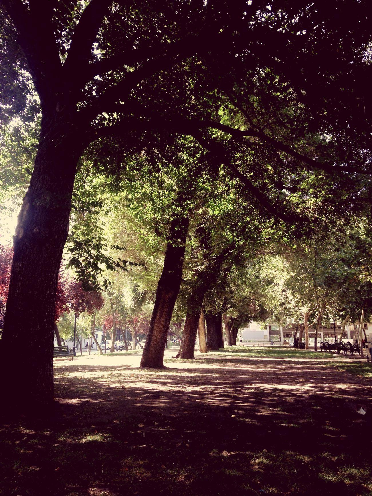 Parque Bustamante Chile Santiago De Chile ParqueBustamante Bustamantepark