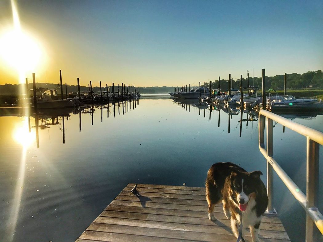 DockDoggy-KingsPark Reflection Water Animal Themes Dog Pets Pier Domestic Animals Sky Clear Sky Outdoors Lake One Animal Mammal Nature Sunlight New York No People Harbor Australian Shepherd  Kings Park Nissequogue River State Park Nissequogue River Long Island, Ny