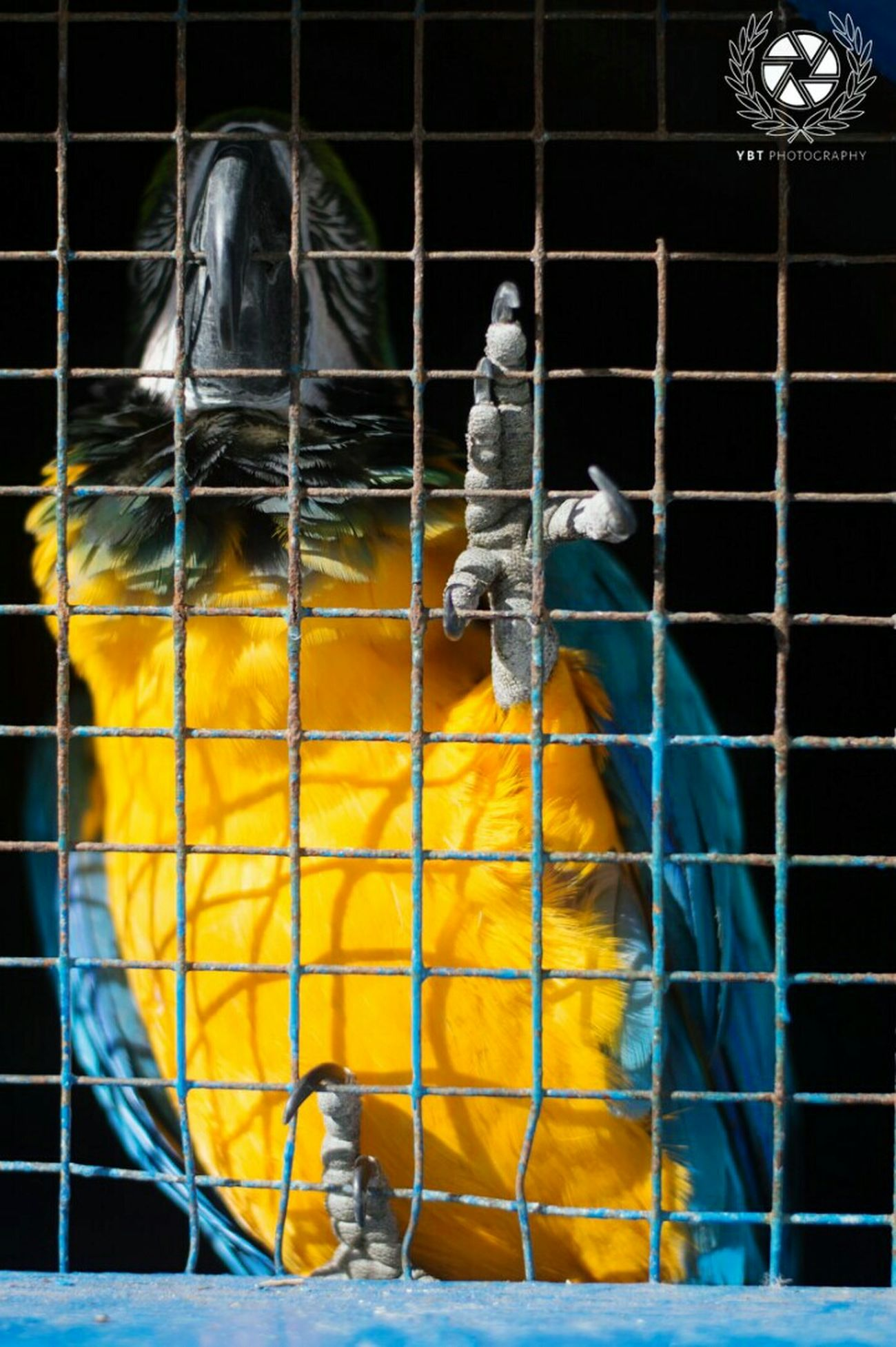 Parrot Bird Photography Birdwatching Looking For Freedom Awesome EyeEm Best Shots Eyemtunisia Nikonphotography