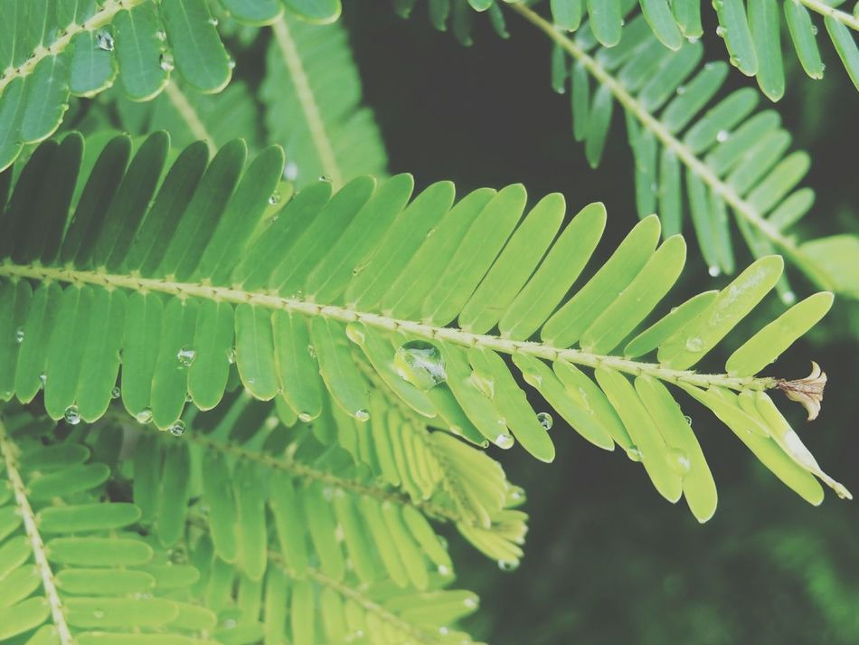 Waterdroplets Rainy Days Murti Greenleaves Feelinghappy
