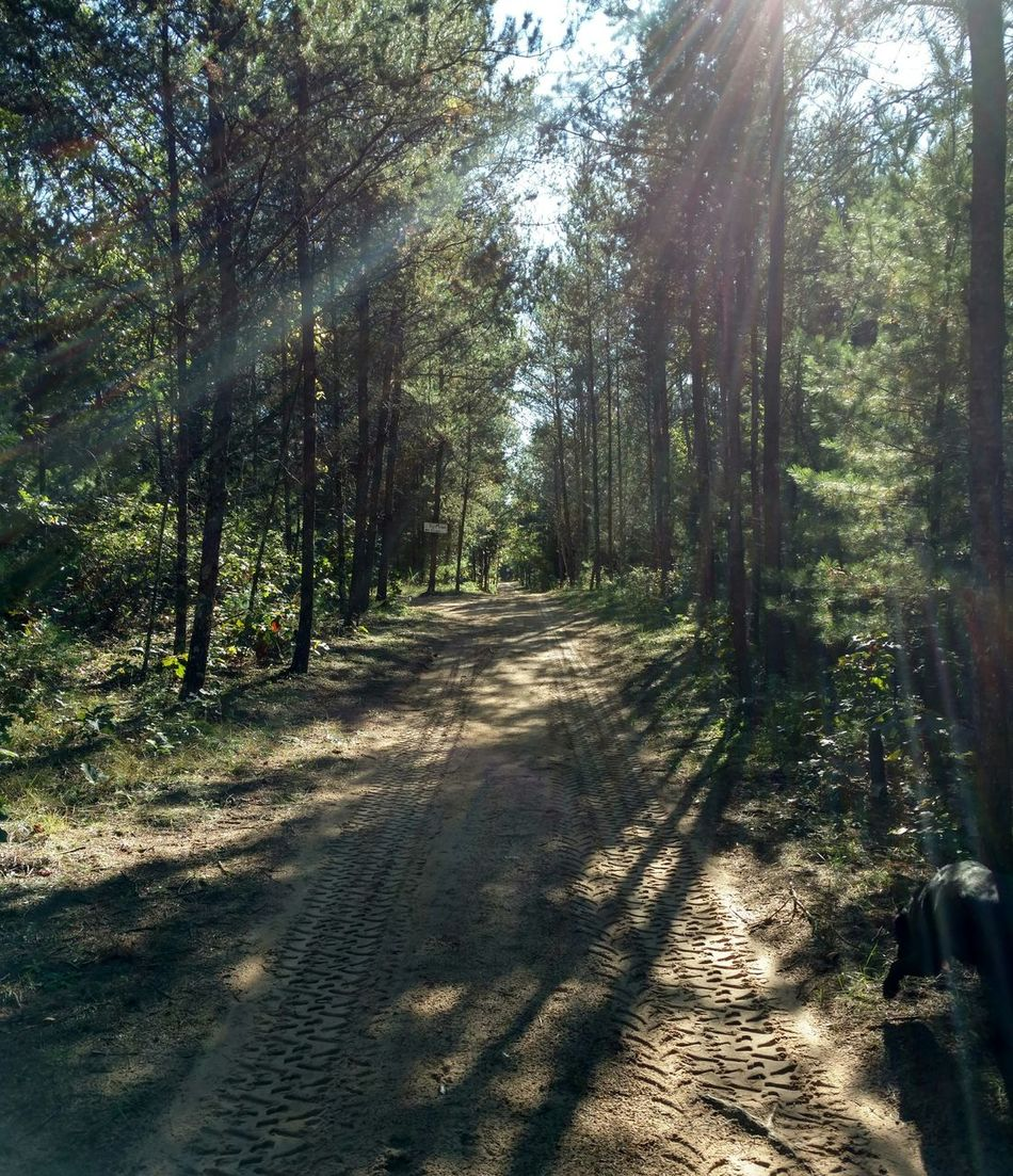 Up north in God's Country Tree Shadow Sunlight Forest Tranquil Scene Tranquility Nature WoodLand Sunbeam Non-urban Scene Beauty In Nature Vanishing Point Footpath Sunny Skies Country Life Outdoor Photography Serenity Calmness Beauty In Nature