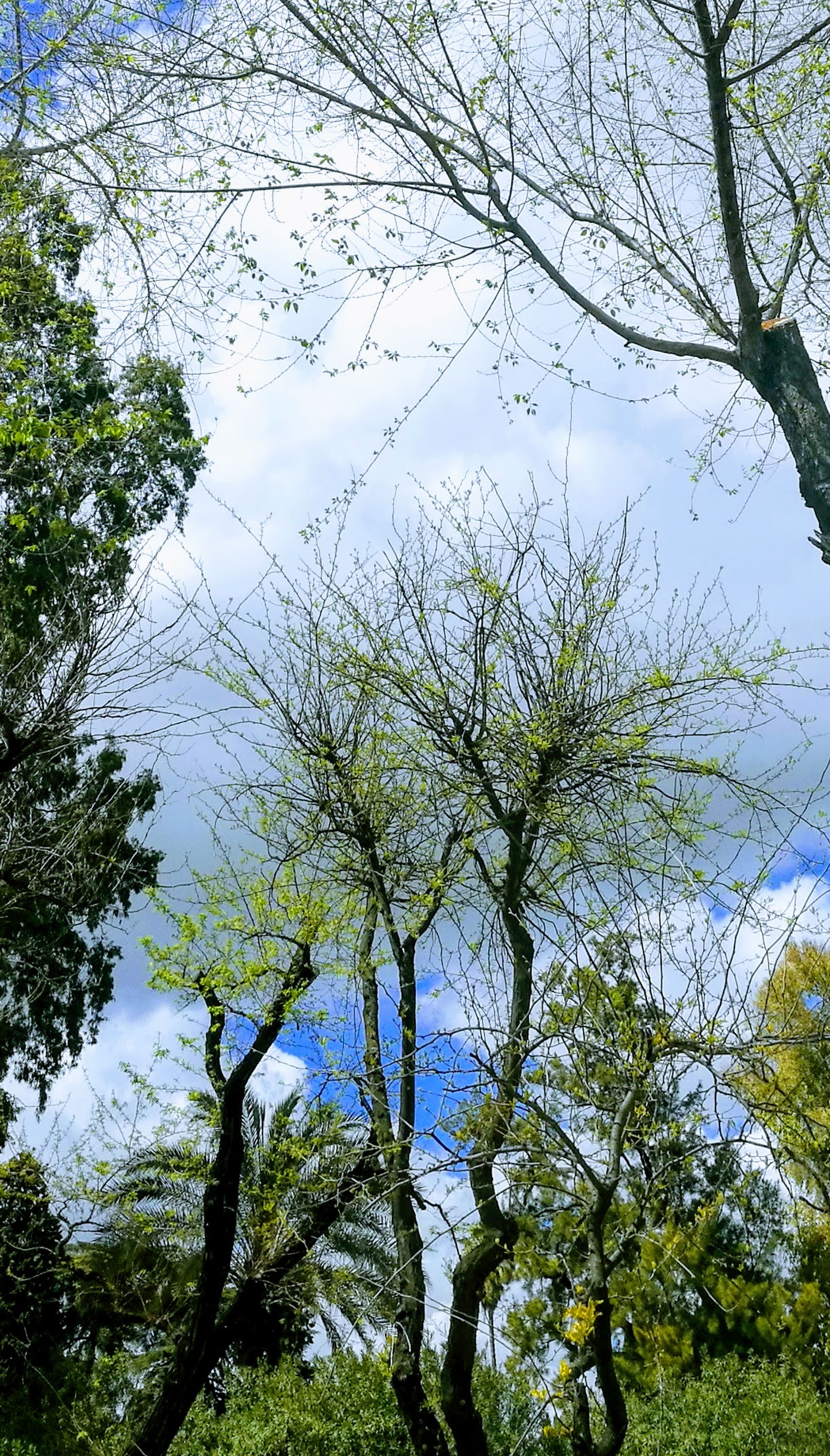 tree, nature, sky, growth, branch, no people, beauty in nature, tranquility, low angle view, outdoors, day, close-up