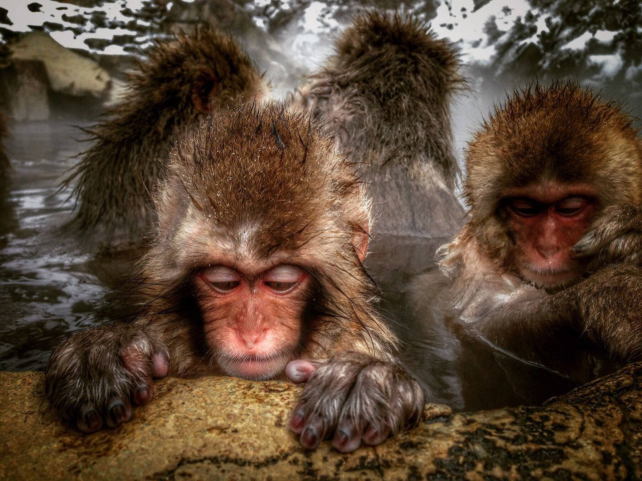 Monkey Snowmonkey Japanese Macaque Baby Snow Monkey Monkey Brothers Bathing Bathing Monkey Onsen Hotsprings Jigokudani Jigokudani Monkey Park Nagano Japan IPhone IPhoneography
