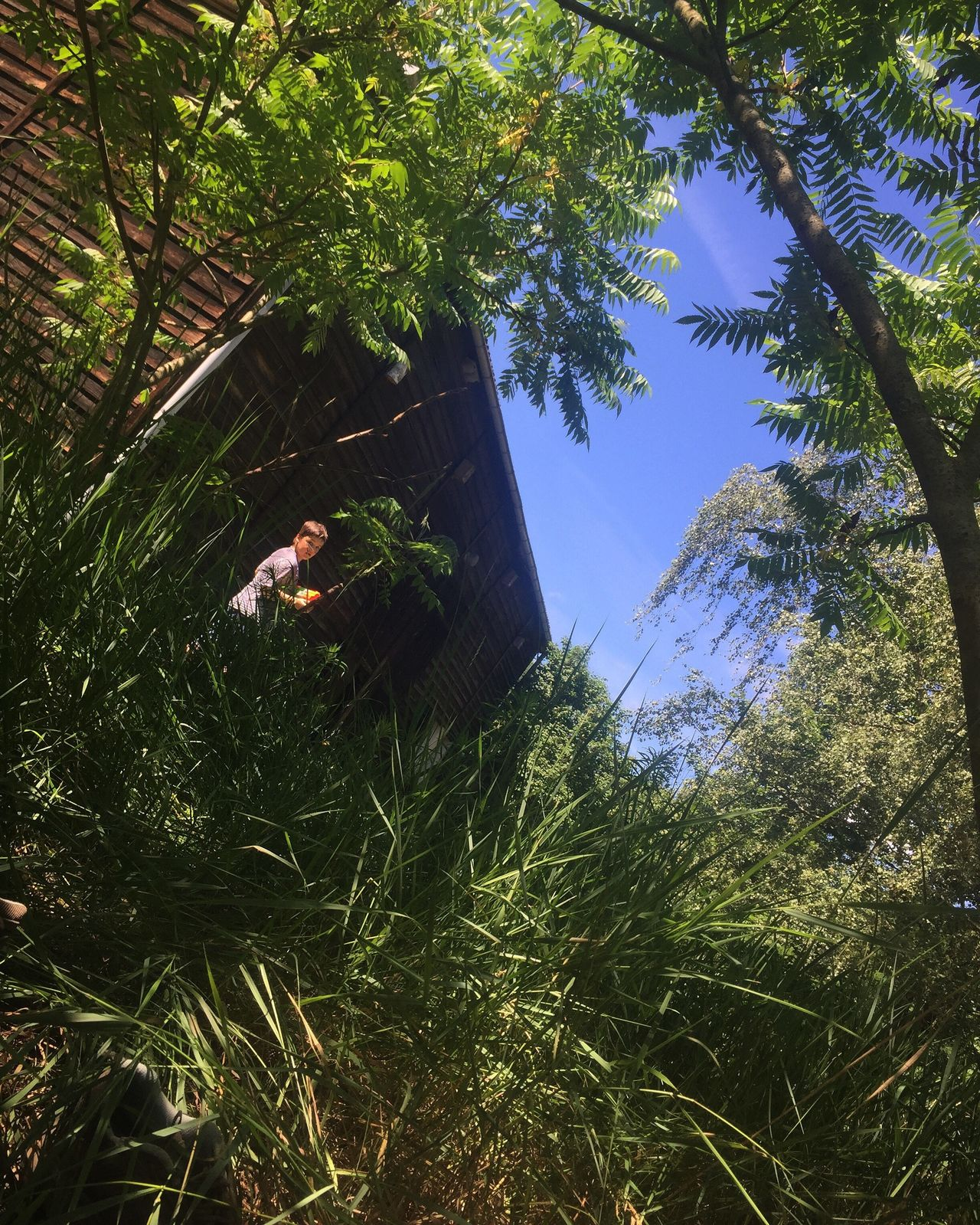 Boy playing in the high grass Tree Low Angle View Growth Day Green Color Architecture Nature No People Outdoors Branch Beauty In Nature Sky Boy Children Game Country Brandenburg