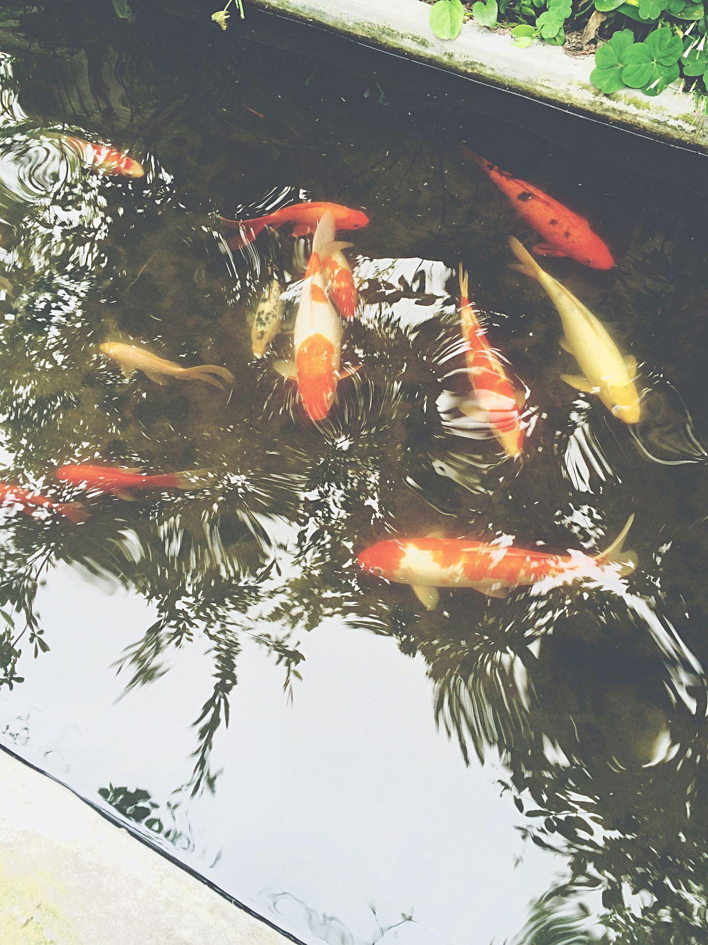 Fish Working Taking Photos