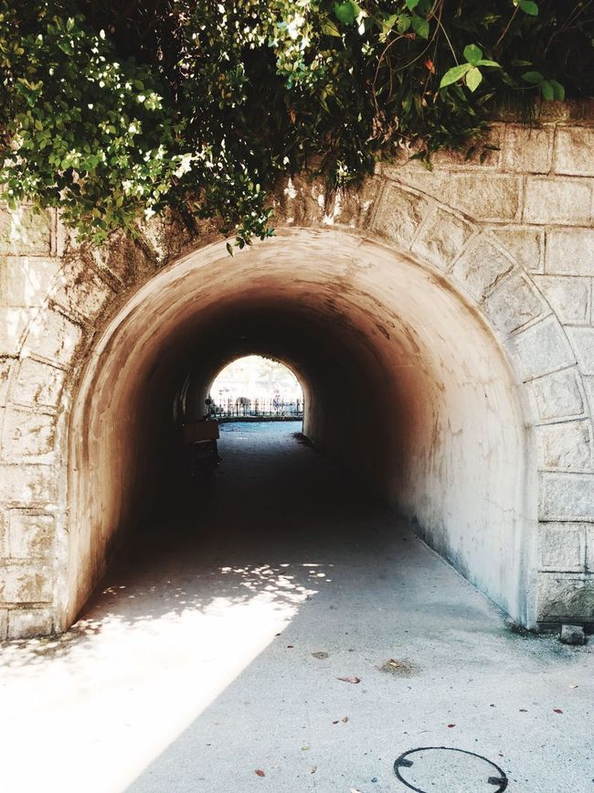 Ivy tunnel Arch Built Structure Architecture Archway Abandoned Day Arched The Way Forward Entrance Narrow Stone Material Messy Diminishing Perspective Arcade Worn Out History Weathered
