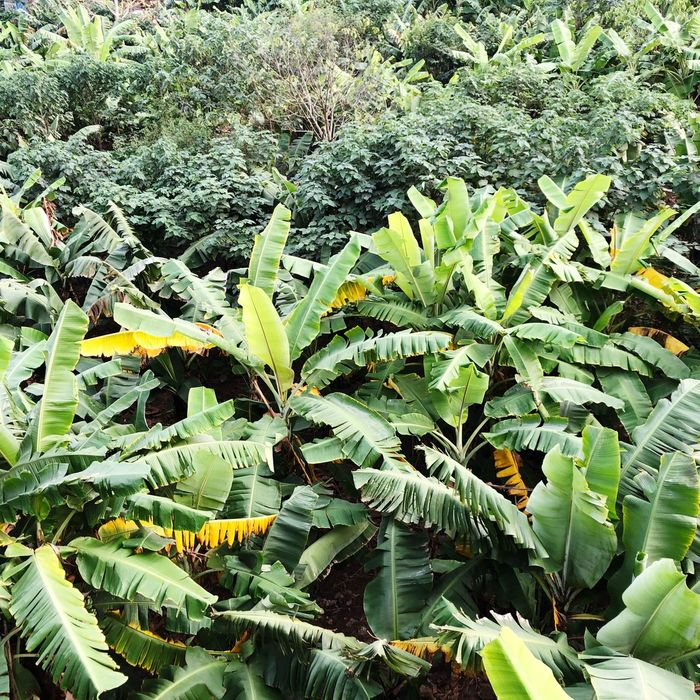 Leaf Green Color Growth Plant Nature No People Day