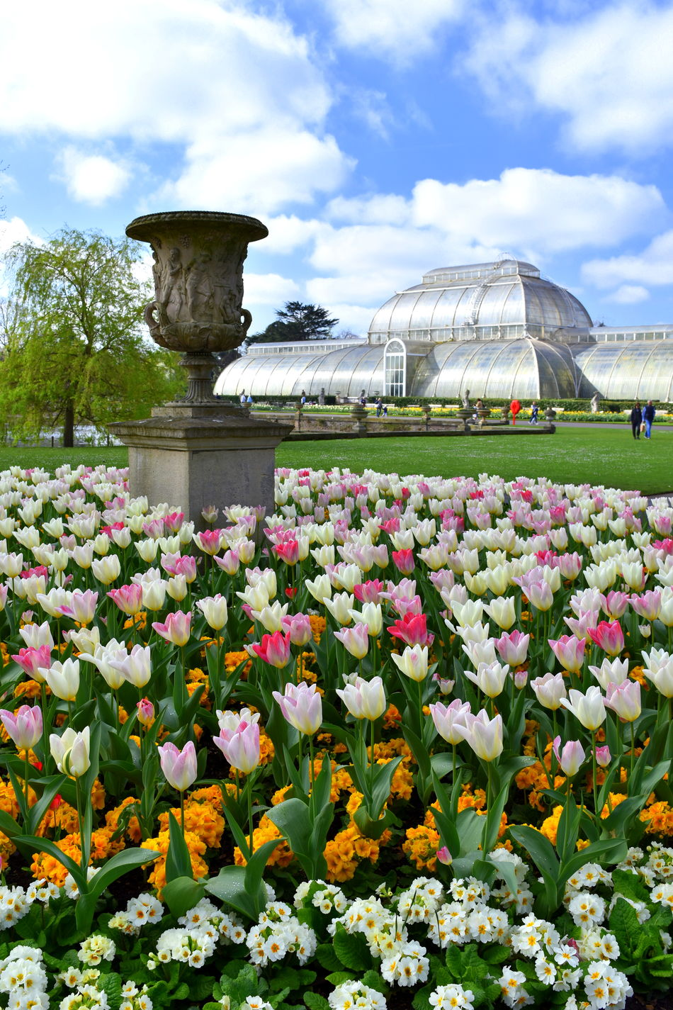 Beauty In Nature Cloud - Sky Day Flower Freshness Growth Kew Garden Kew Gardens Kew Gardens, London Nature Outdoors Plant Sky Tulip Tulips Tulips Flowers Tulips🌷
