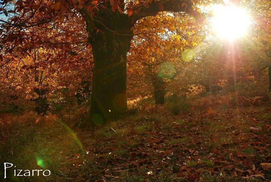 Sun Outdoors Nature Tree Almonaster Sunlight First Eyeem Photo