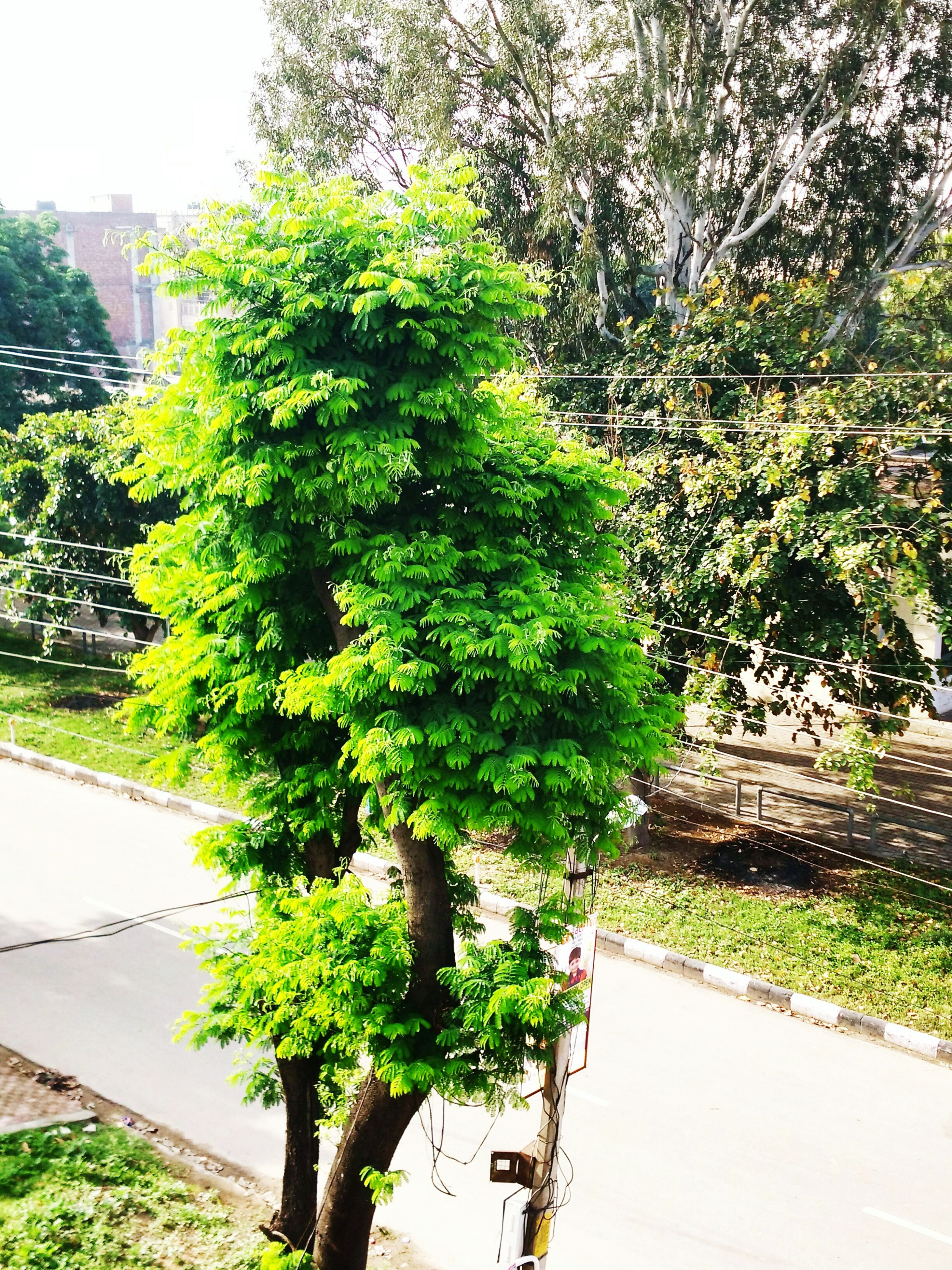 tree, growth, green color, plant, nature, park - man made space, road, branch, lush foliage, sunlight, footpath, transportation, green, beauty in nature, day, outdoors, growing, tranquility, the way forward, no people