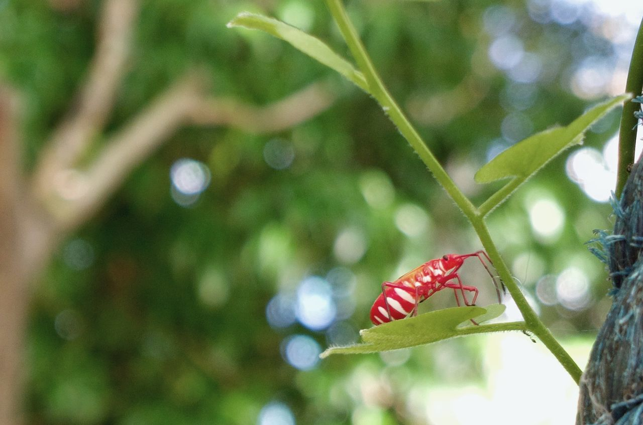 Insect NbanFamily Nokia808Pureview Eyeem Philippines