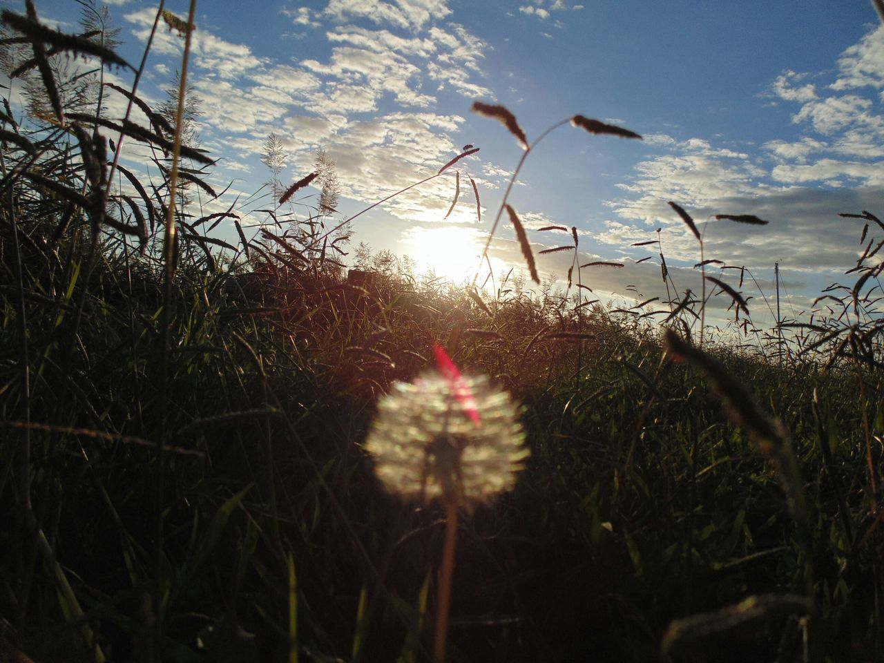 Glitch EyeEm Best Shots - No Edit Dandelion Hanging Out Dandelion Collection Moita EyeEm Nature Lover Flower