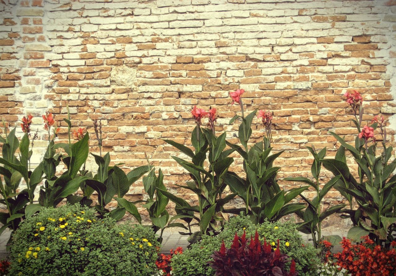 Architecture Brick Wall Building Exterior Built Structure Day Flower Fragility Freshness Growing Growth House Leaf Nature Outdoors Plant Potted Plant Red Stone Wall Wall Wall - Building Feature Father's Pic