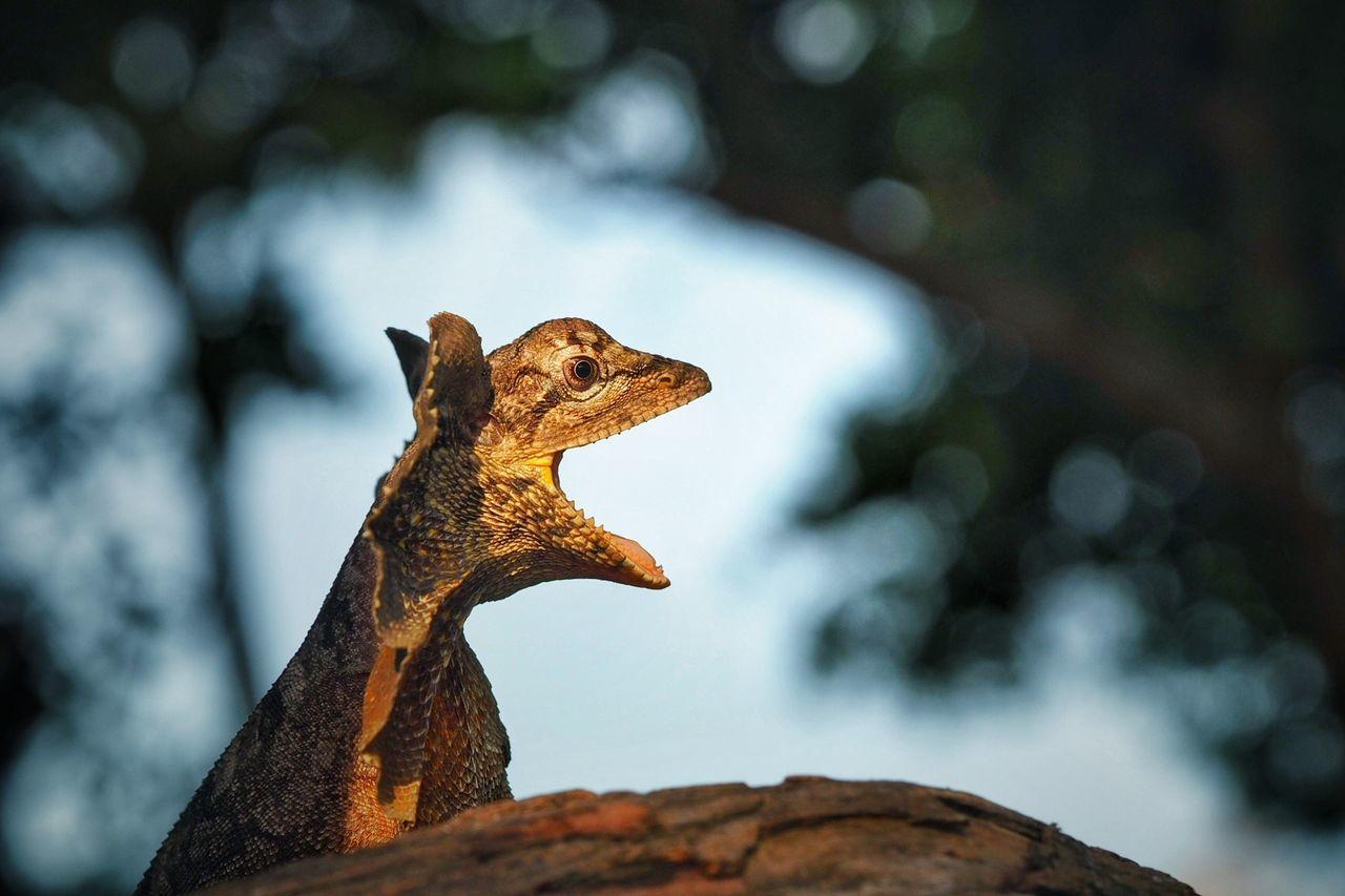 Beautiful stock photos of krokodil,  Animal,  Animal Body Part,  Animal Head,  Animal Themes