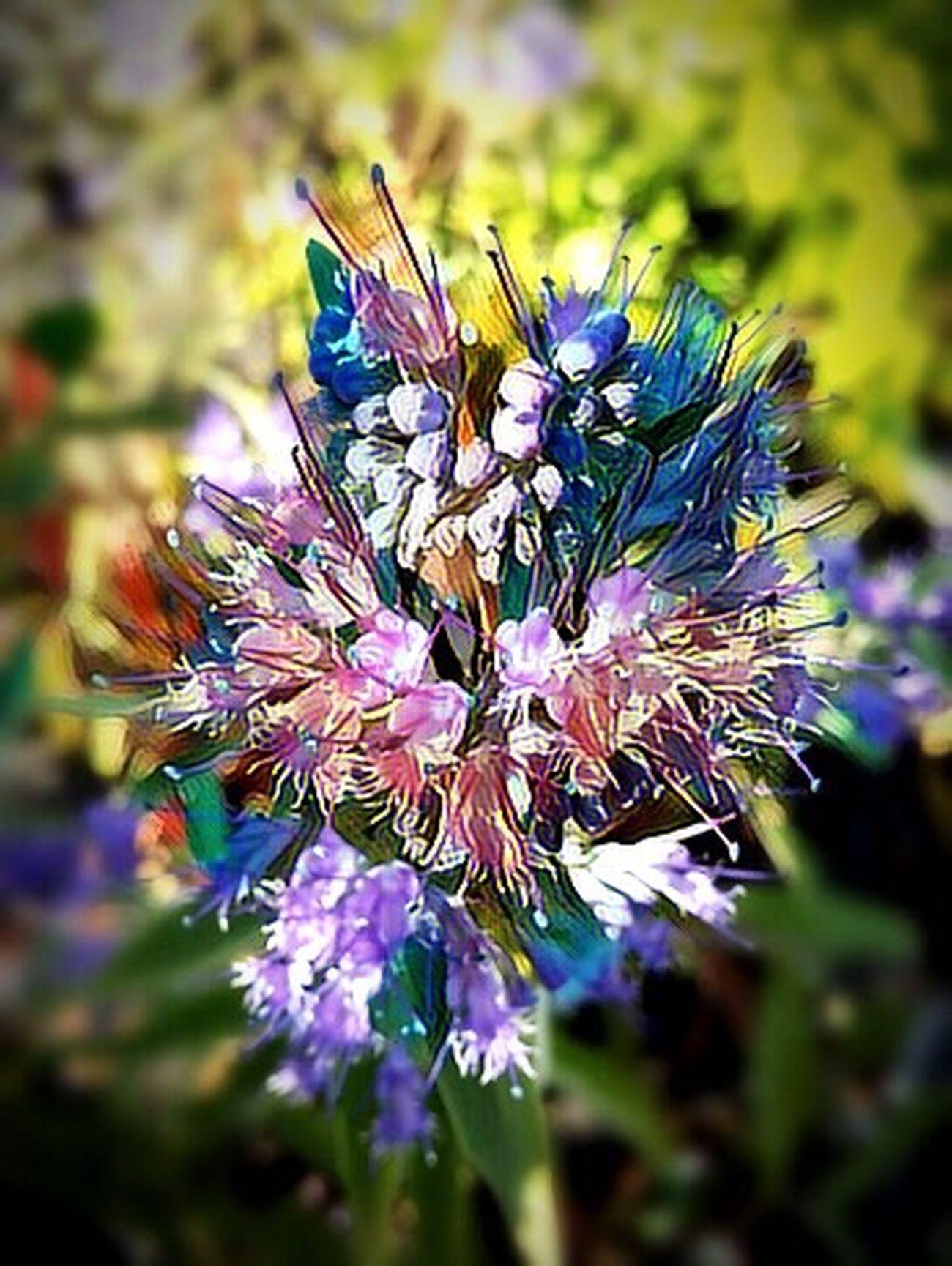 Photography Flower Focus On Foreground Fragility My Edit Picsart Edit Eyeem Edit