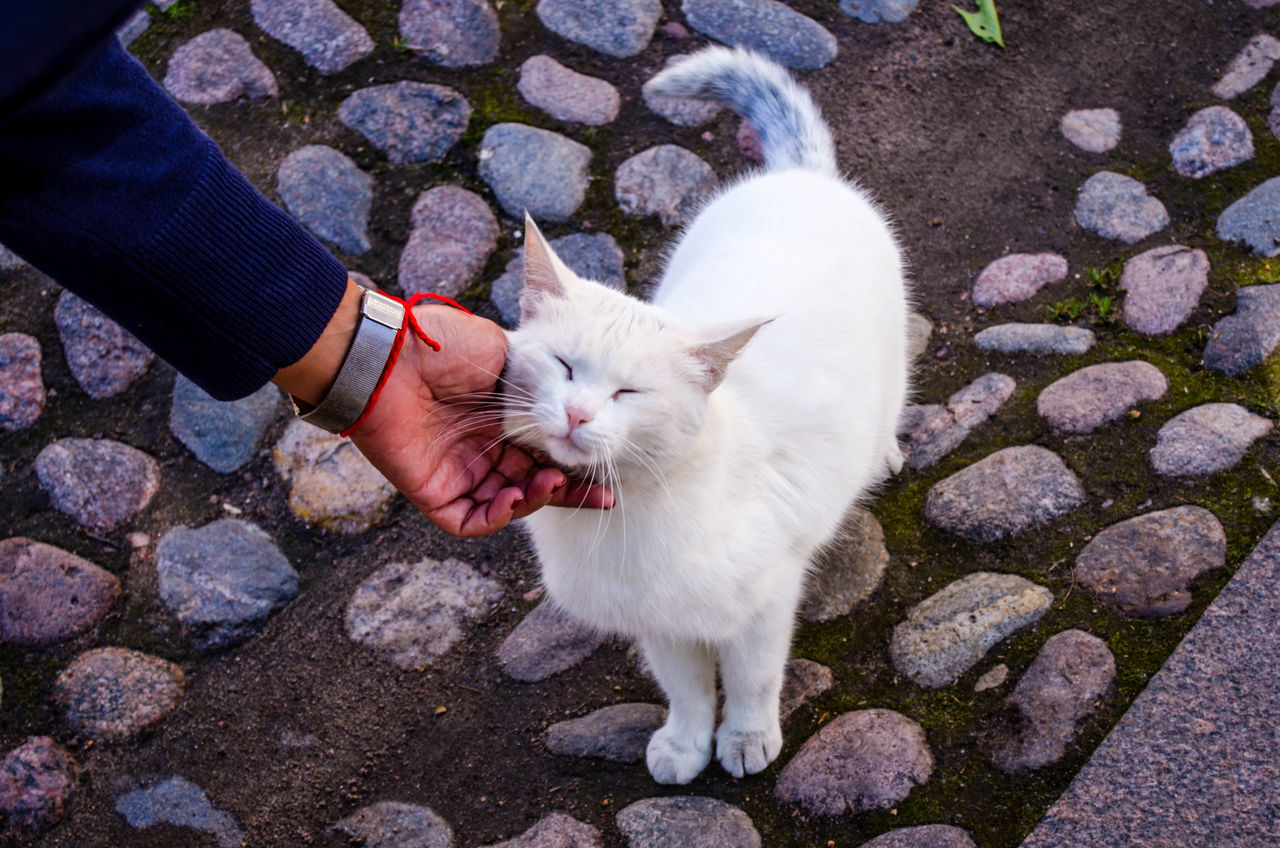 Animal Animal Themes Cat Close-up Day Domestic Animals Domestic Cat Feline Mammal One Animal Outdoors Pampered Pets Pets Petting Animals Standing Whisker Zoology