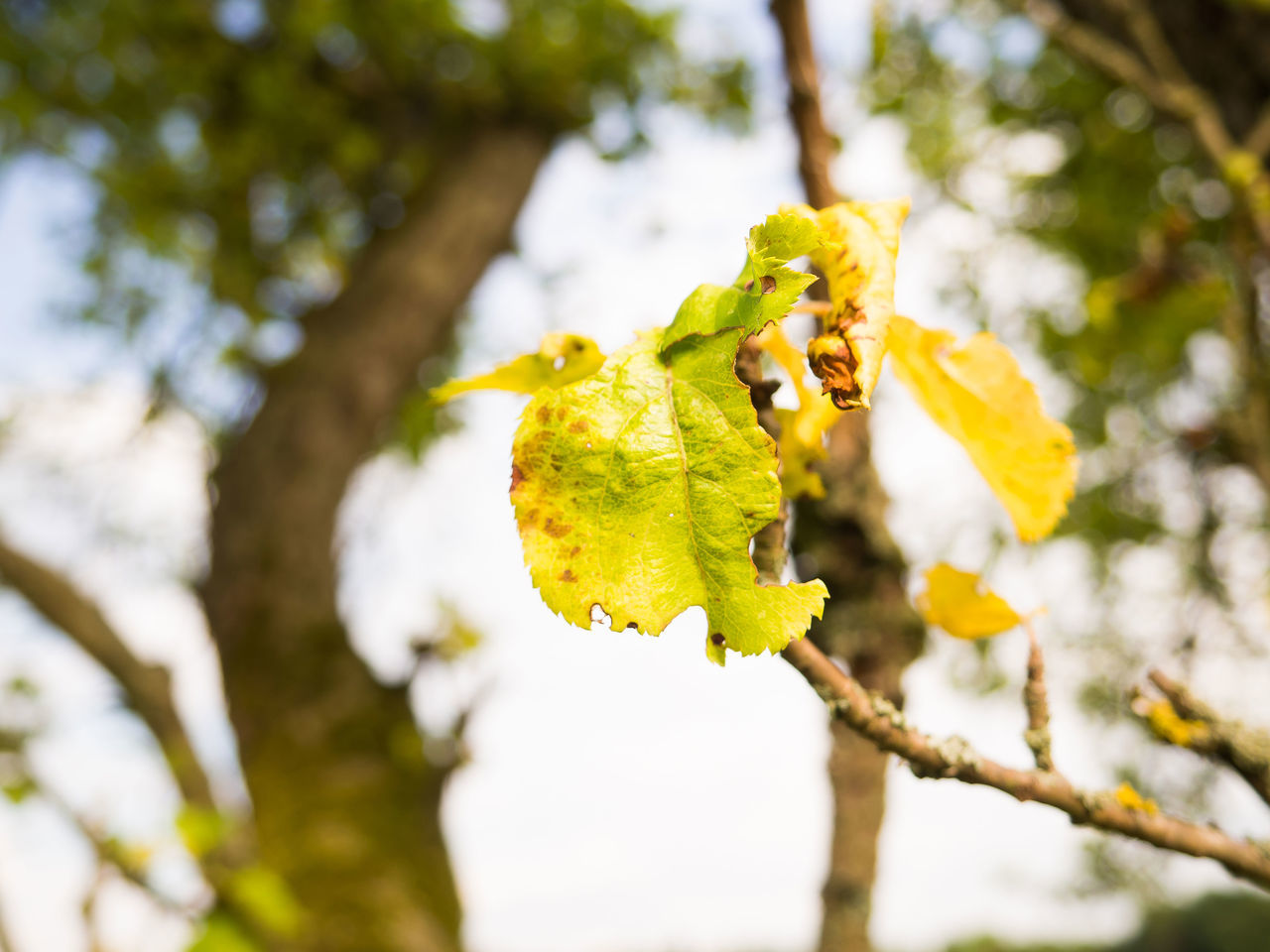 nature, growth, focus on foreground, beauty in nature, day, outdoors, green color, close-up, yellow, low angle view, plant, no people, leaf, flower, tree, fragility, freshness, branch