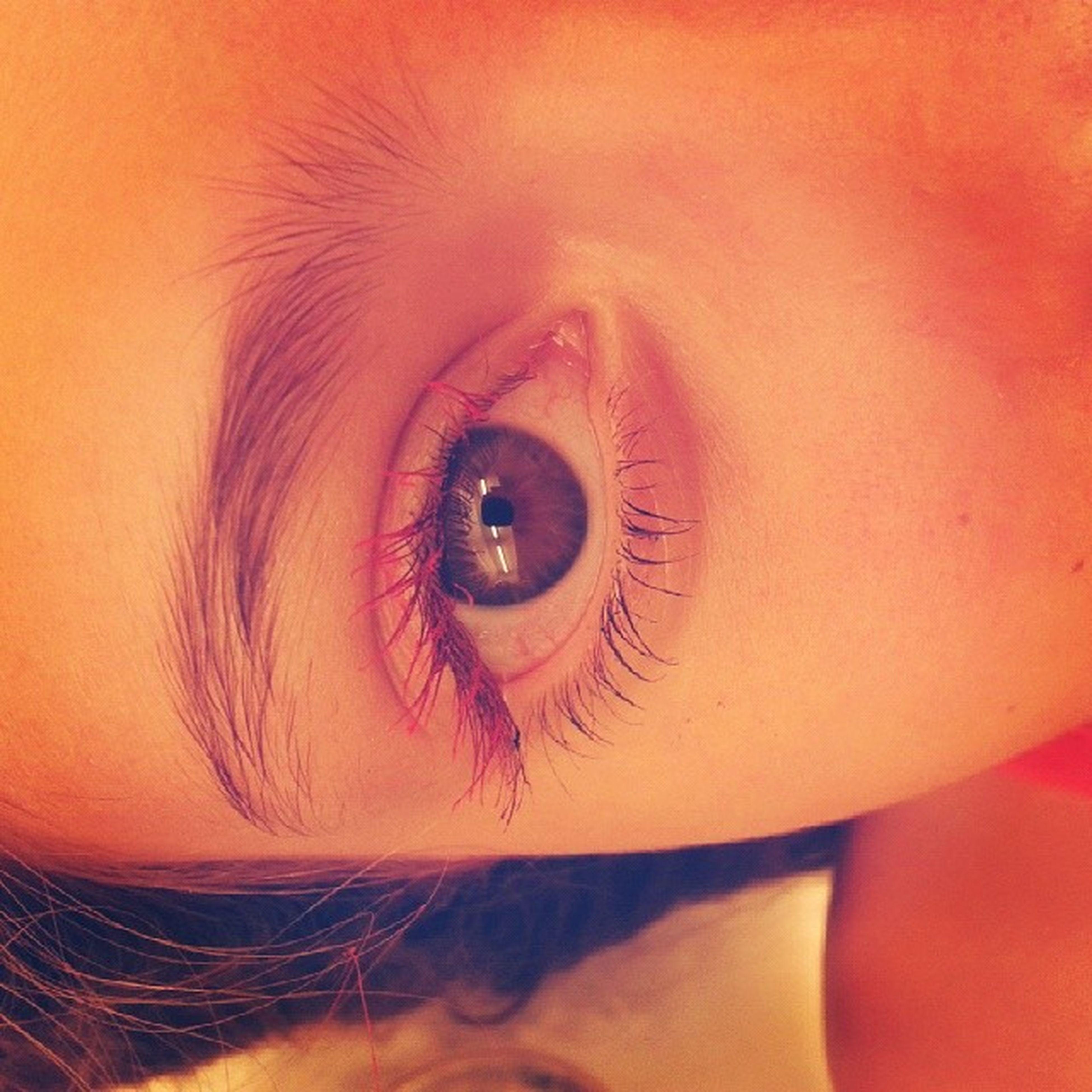close-up, indoors, human eye, lifestyles, full frame, part of, backgrounds, looking at camera, portrait, leisure activity, headshot, eyelash, extreme close-up, eyesight, person, detail, orange color