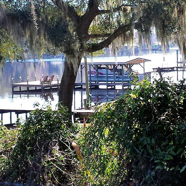 Clay County, Florida Florida Spanishmoss Sunlight Beautiful Sun Fleming Island Fl Secret Hideaway The 00 Mission