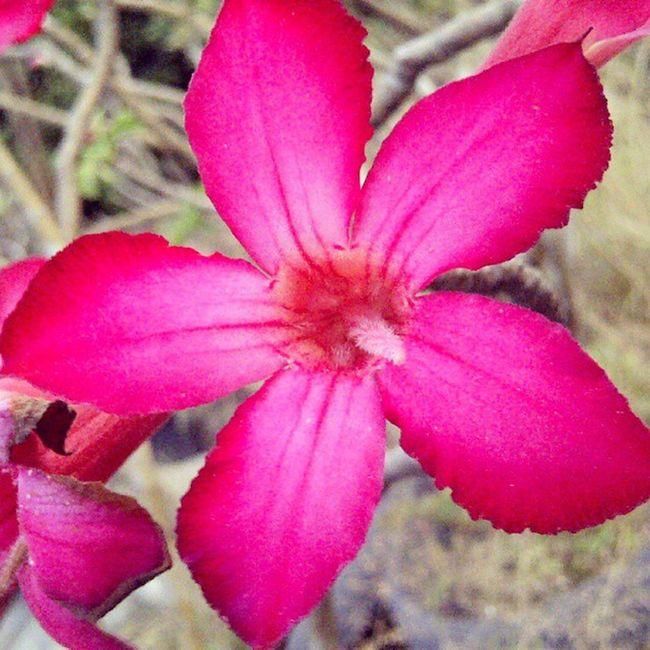 Flower Flowers Blackberrycamera Blackberry9860 blackberrymonza niceshot beautiful