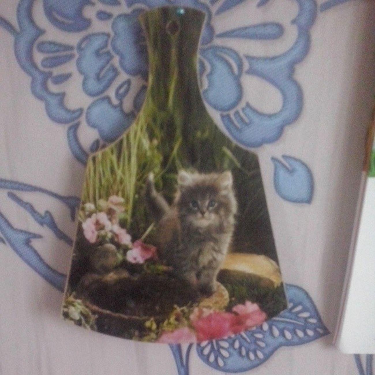 Подарок на 7-летие нашей дружбы от моей любимой подруги! Спасибо тебе, @dmitrovchanochka! Catgoesmeow Catlover Люблю_кошек ЛюбителямКошек сувенир