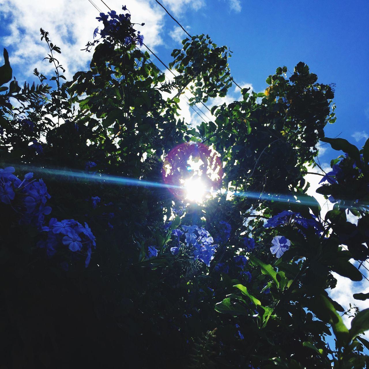 Blue sky's blue flowers Menehunie Road Kauai Kiiroad Kauai♡