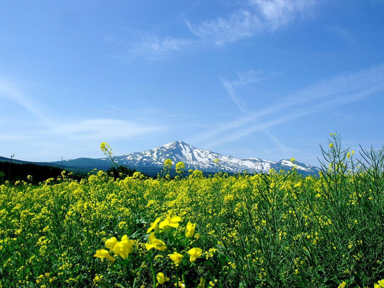 EyeEm Best Shots EyeEm Flower EyeEm Gallery Hello World Sky_collection Mountain View Flower Photography Yellow Flowers Relaxing Sky And Clouds Enjoying Life 菜の花