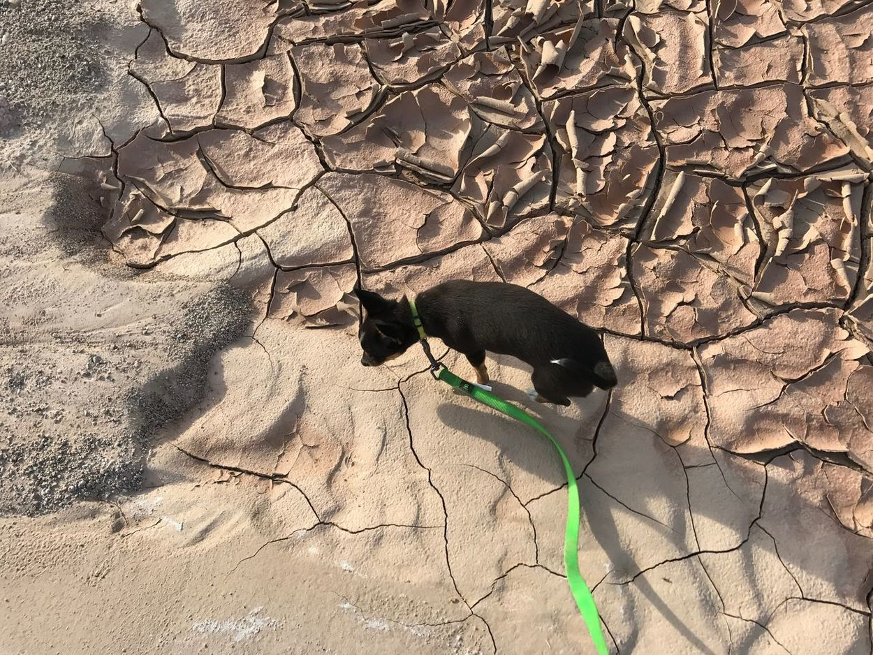 Nature Sunlight One Animal Domestic Animals No People Outdoors Beauty In Nature Mud Flat Drying Up Photobombed By My Dog