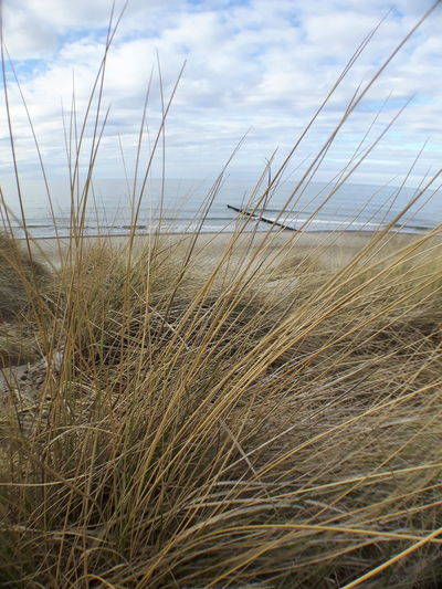Beach Beauty In Nature Cloud - Sky Day Field Grass Growth Horizon Over Water Marram Grass Nature No People Outdoors Plant Scenics Sea Sky Tranquil Scene Tranquility Water