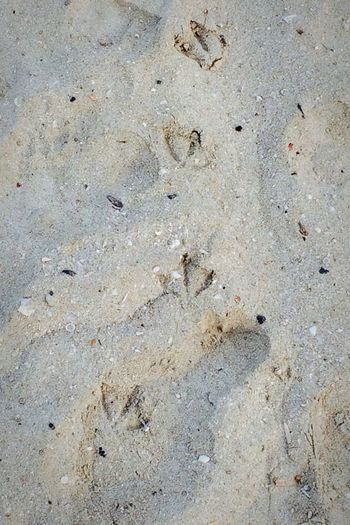 At The Beach Beach Beautiful Sunny Day Footprints Birds Sand Check This Out Taking Photos Relaxing ♡