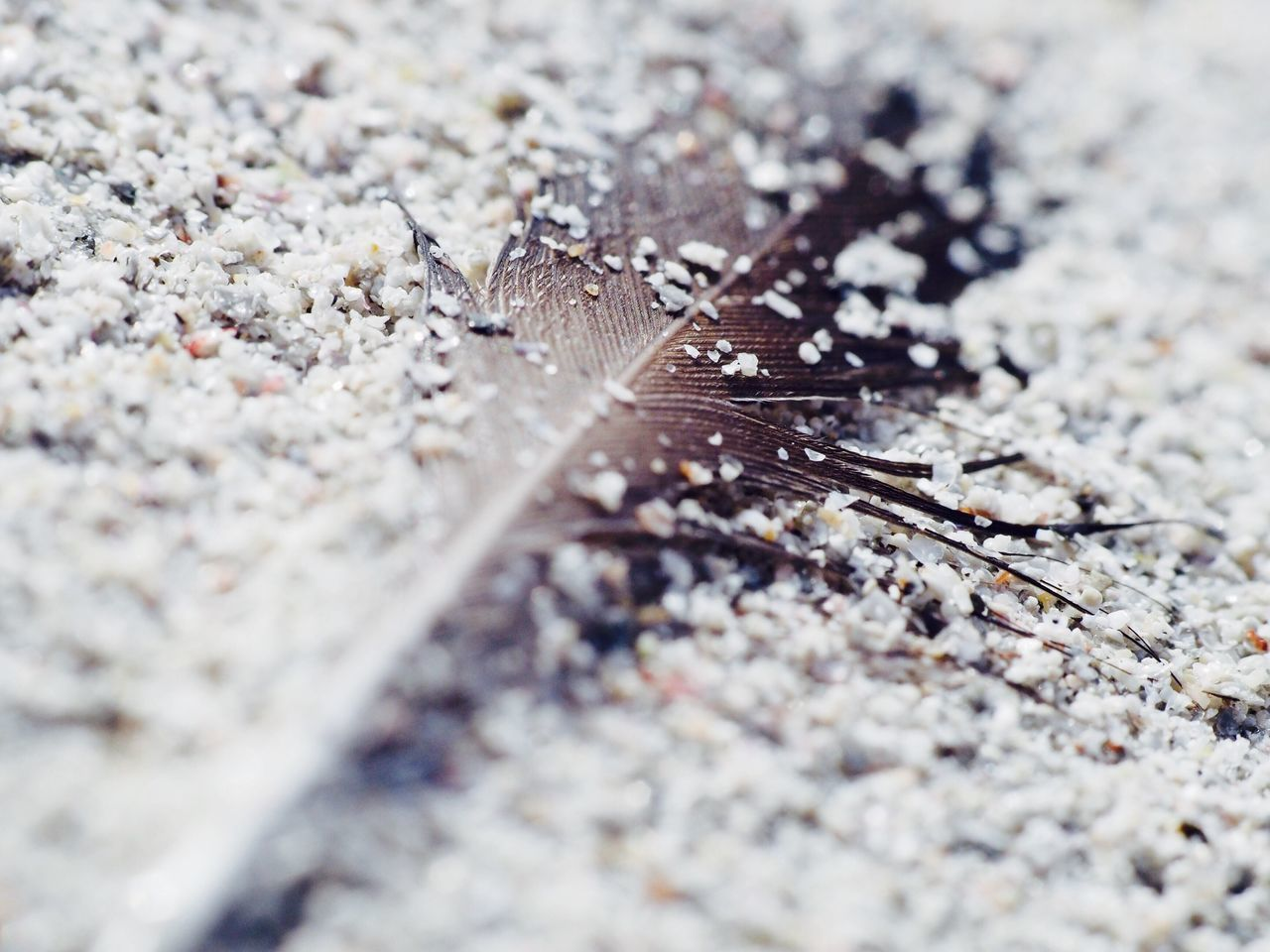 Feather in sand Selective Focus Beauty In Nature Fragility Feather  Sand Grains Of Sand Macro Macro Photography Macro Photo Surface Level Nature Macro Nature Macrophotography Close-up Extreme Close-up