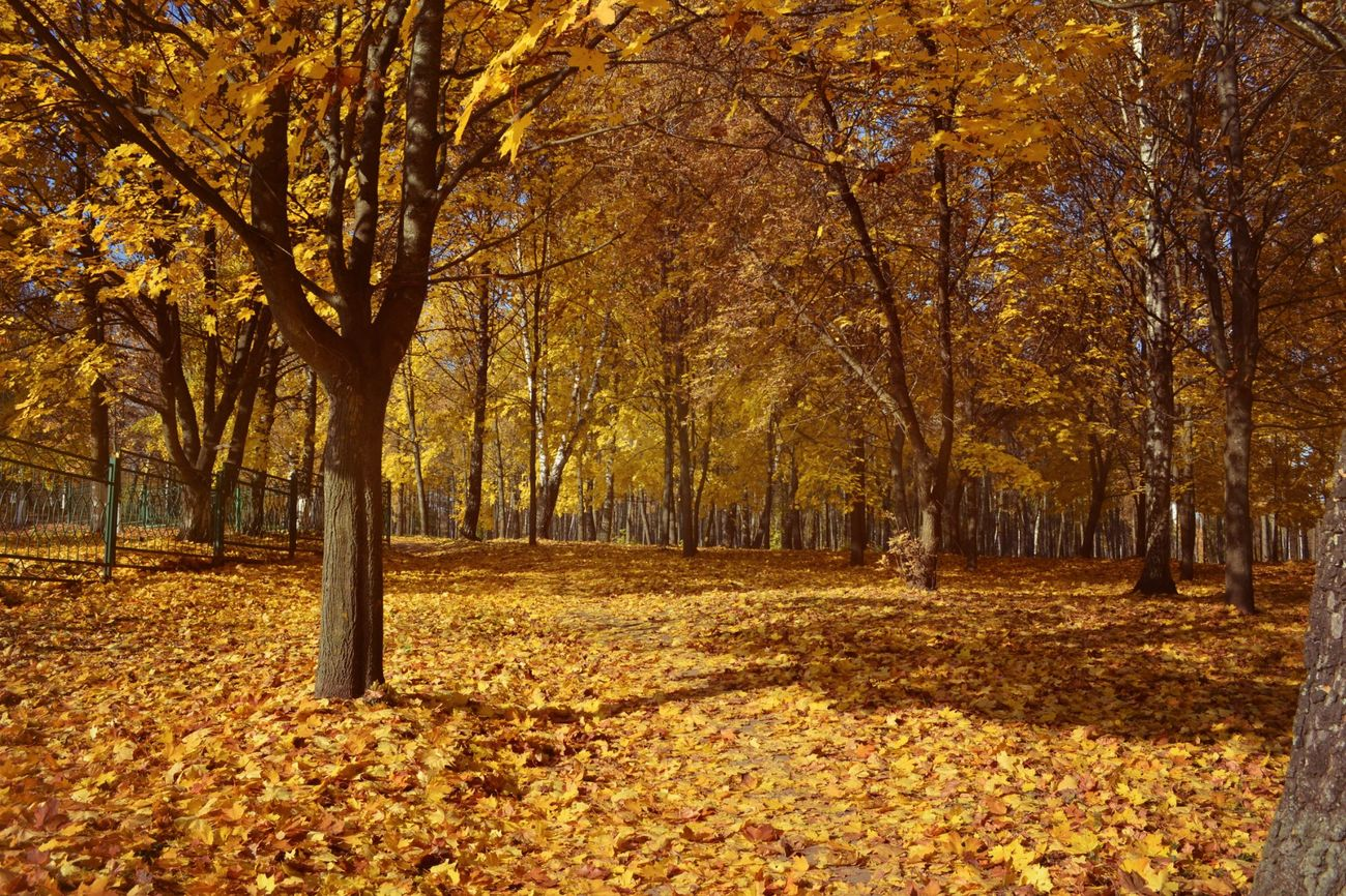 Autumn Trees Park Around